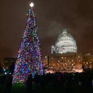 Lights Across the Country: DC and the Capitol Tree