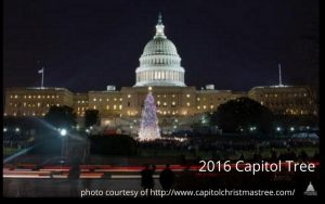 Best Places to Read About the 2016 Capitol Tree