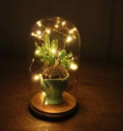 Succulents under glass – with lights!