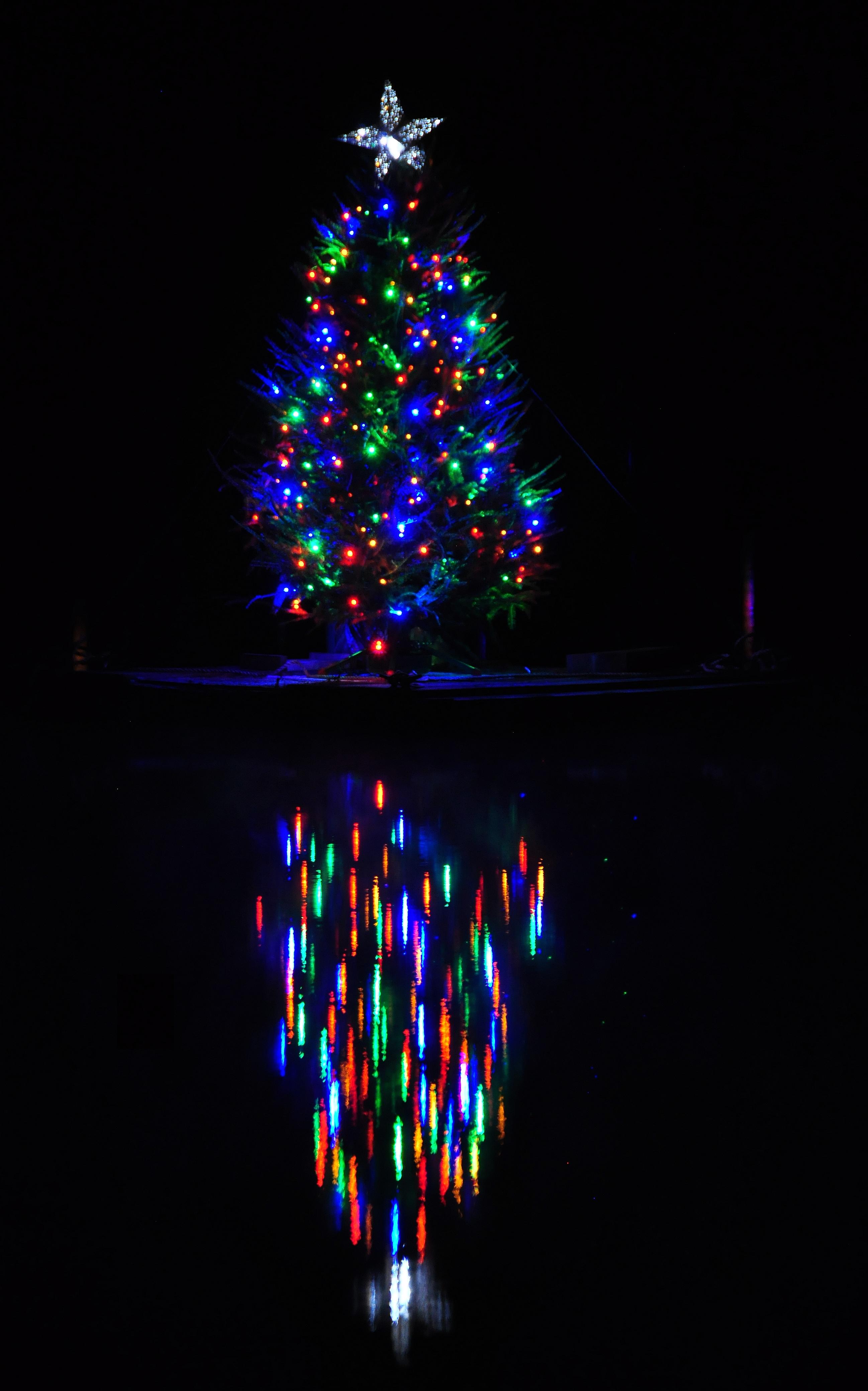 Lights on a tree on a lake! – Christmas Light Source