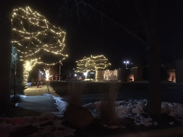 Customer Photo: Warm White LED Light strings on Trees!