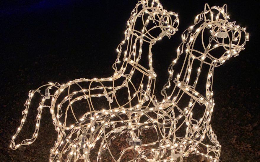 Customer Photo: Relighting a Herd of Horses