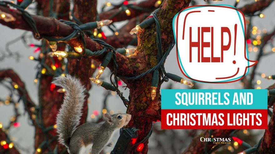 Help! Squirrels and Christmas Lights (They're eating my lights!)
