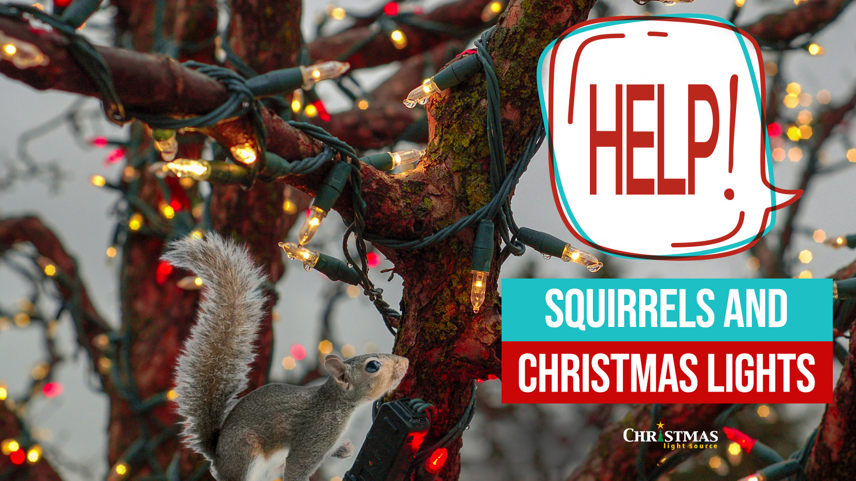 Help Squirrels And Christmas Lights They Re Eating My Lights